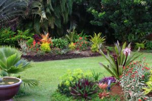 Landscape design in St Pete