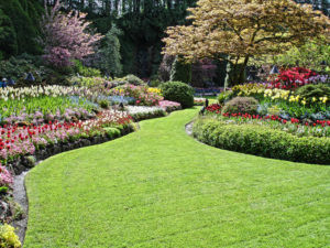 residential landscaping clearwater fl