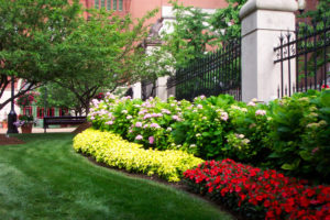 Commercial landscapers in St Pete