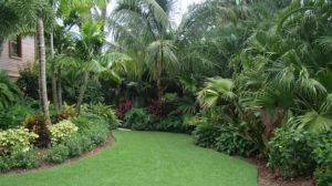 Landscaping company in St Petersburg Fl