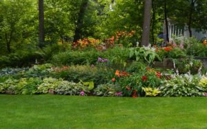 residential landscaping in St Pete fl